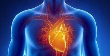 Cardiovascular Wellness Cardiac Image - Health Culture